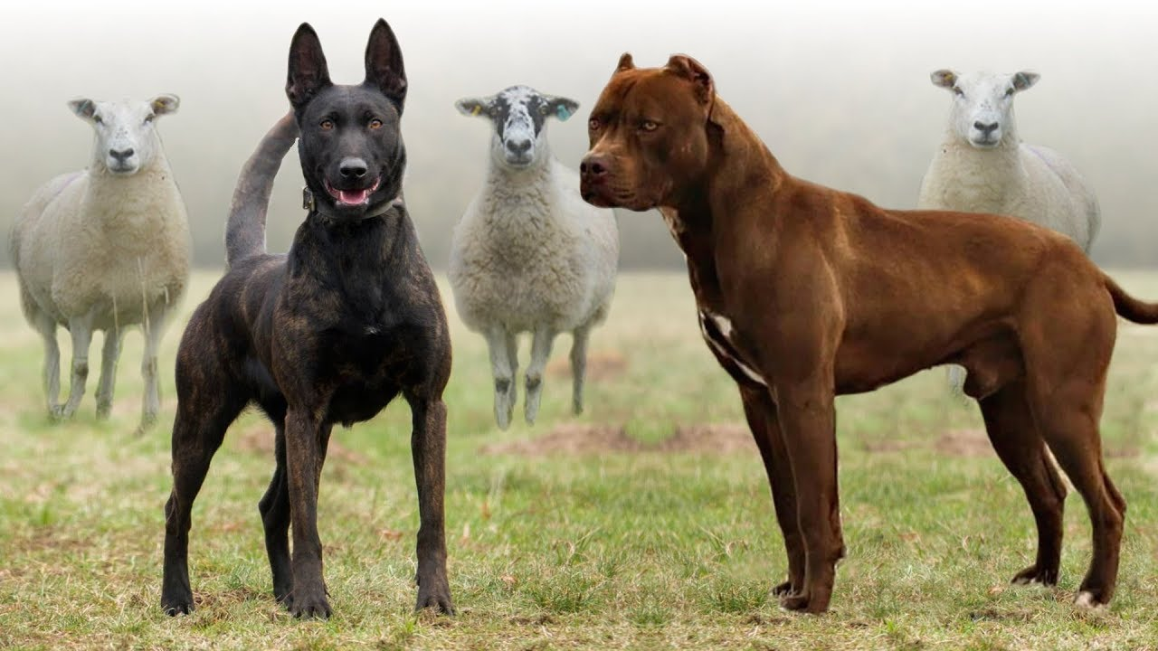 These Are 10 Best Farm Dog Breeds - YouTube