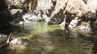 Golden Retriever Swim Oregon Pool