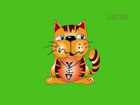 Футаж. Веселый кот