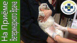 Осмотр и УЗИ Кошки Воспаление Культи Матки