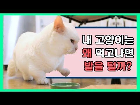 고양이는 왜 먹고나면 발을 털까? 🤔