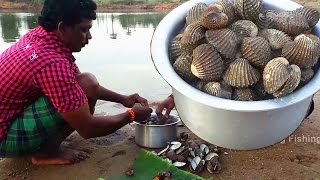 Cockle (Bivalve) Catch n cook spicy recipe | Oyster shellfish Roasted recipe in village