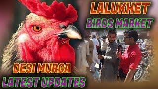 Lalukhet Birds Market Desi Murga for sale Latest Update 18-3-2018Jamshed Asmi Informative Channel