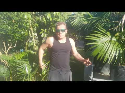 Kentia Palm Guide - Howea Fosteriana
