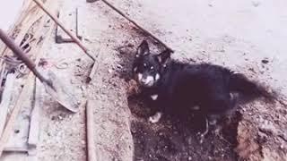 Прикол !!! Собака роет землю