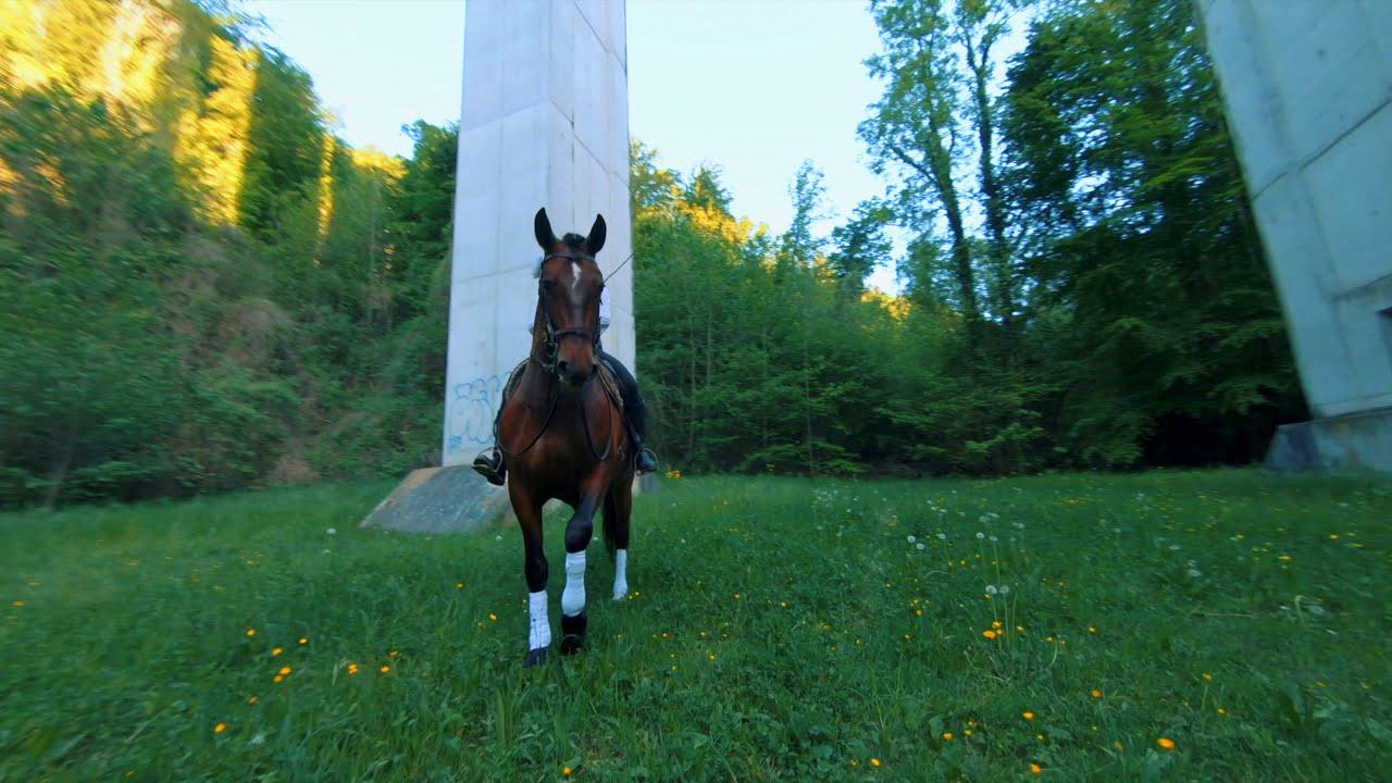 FPV vs Horse картинки