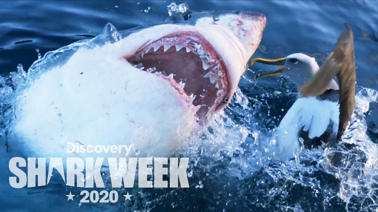 Everything you need to know about Shark Week 2020