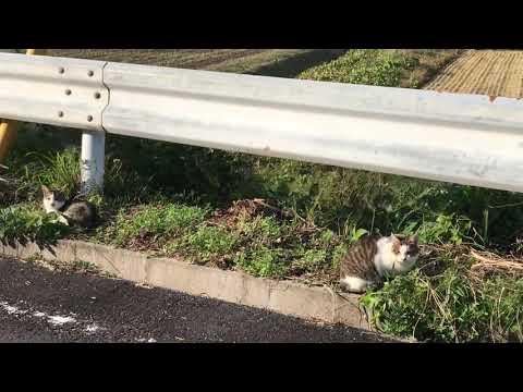 外出中 みつけた 野良猫 2匹 道路脇で・・・【cat・kitten・kitty】