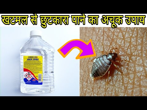 Experiment with bedbugs खटमल से छुटकारा पाने के अचूक उपाय,,How To Get Rid  of Bed Bugs -bed bugs,