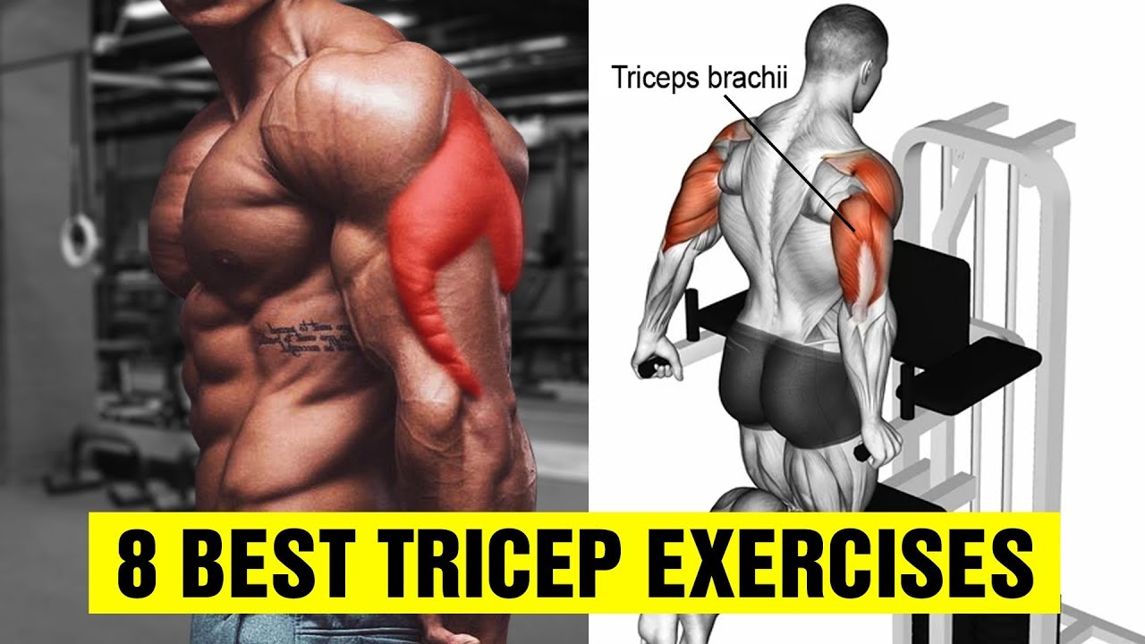 8 Best Tricep Exercises for Bigger Arms – Gym Body Motivation