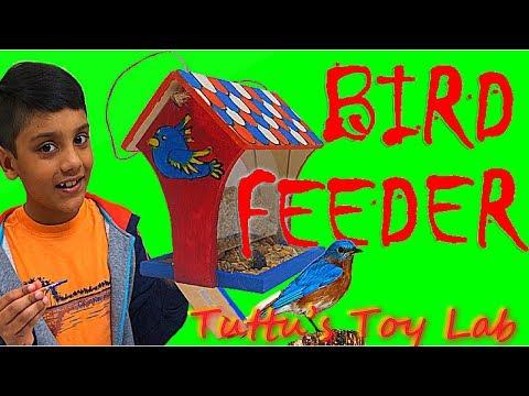 Bird Feeder   Feeding birds in Spring
