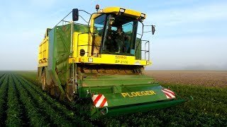 Sperziebonen oogst Proefboerderij Ebelsheerd in Nieuw-Beerta.