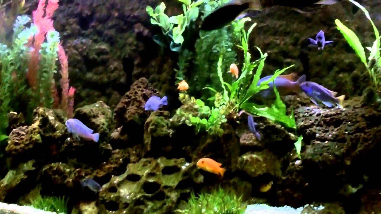 DIY Rock Cave Aquarium Background using PVC Pipes and Great Stuff