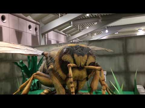 The huge insect world 【巨大昆虫ワールド】