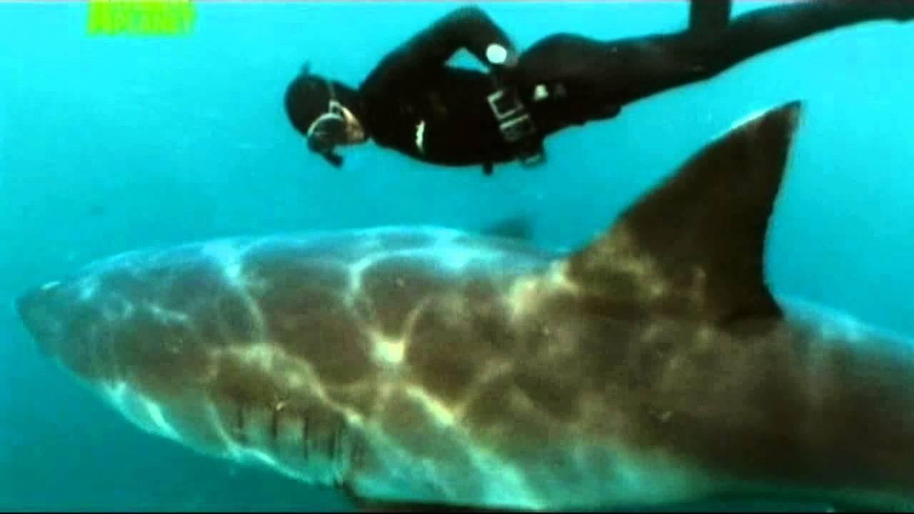 Ночной клуб белая акула ночной клуб алмаз