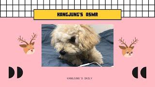 푸들 강아지의 과자 ASMR / 강정's 데일리/ 강아…