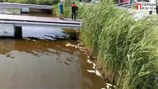 Мор риби на озері Выгонощанском Ивацевичский район 20 червня 2019