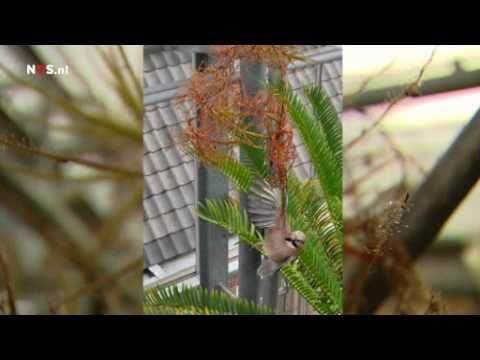 Vogel zit vast in vleesetende plant