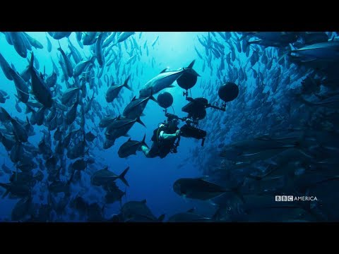 The Penultimate Episode | Planet Earth: Blue Planet II | Saturdays @ 9/8c on BBC America
