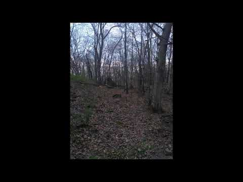 New evidence of BIGFOOT / yeti Your Videos on VIRAL CHOP VIDEOS
