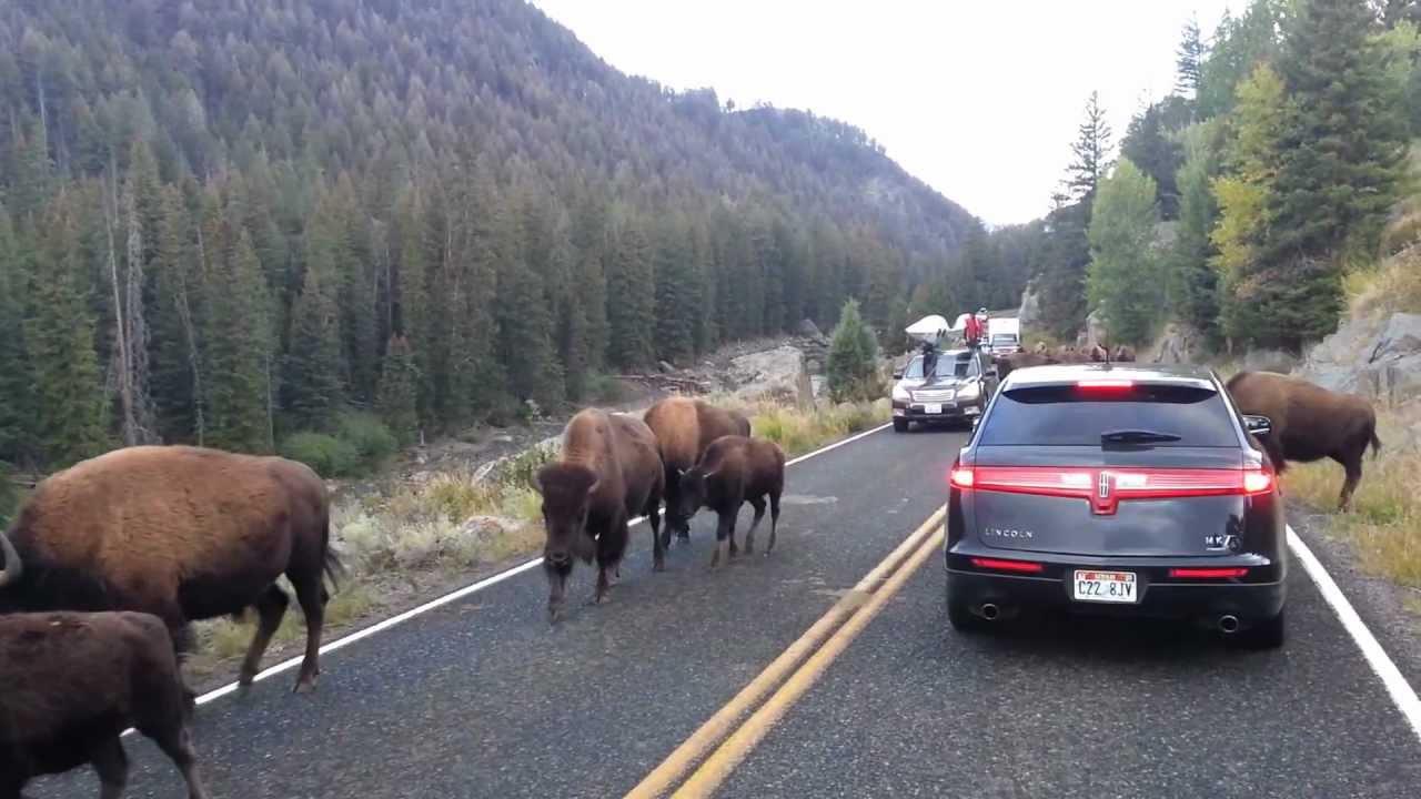 Driving Car Buffalo