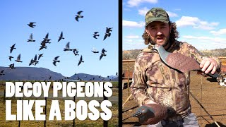How to Decoy Pigeons (contains hunting... lots of hunting)
