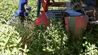 Self propelled Haskap/Aronia Harvester - Kombajn samojezdny OSKAR 4WD