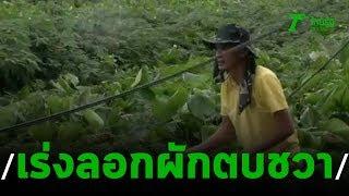 เร่งลอกผักตบชวา เปิดทางระบายน้ำท่วมอุบลฯ   20-09-62   ข่าวเที่ยงไทยรัฐ