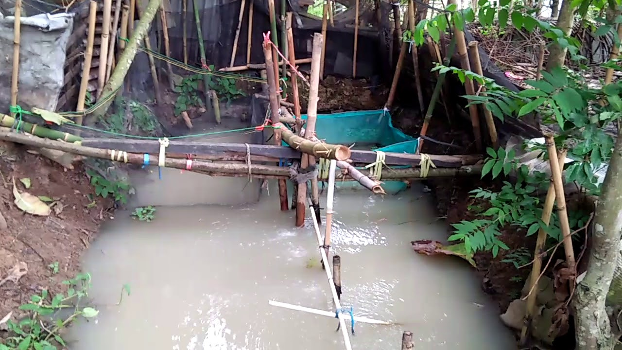 Budidaya ikan nila merah dan bawal kolam tanah - YouTube