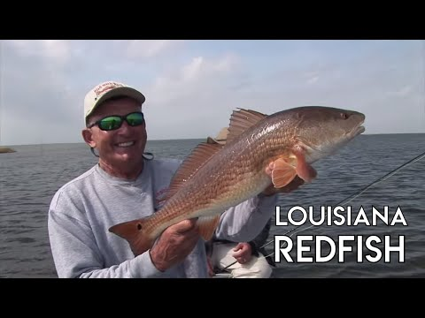 Redfish Fishing In Louisiana