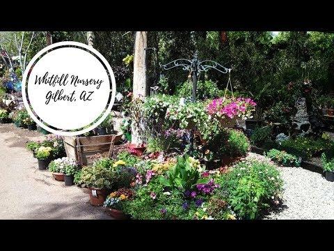 Whitfill Plant Nursery Gilbert