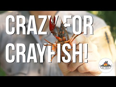 GETTING CURIOUS -about Crayfish!