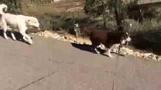San Diego Aggressive Dog Training