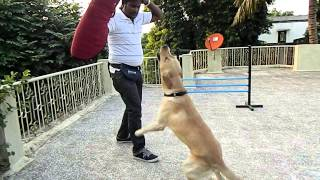 Dog Training, Maharashtra, India