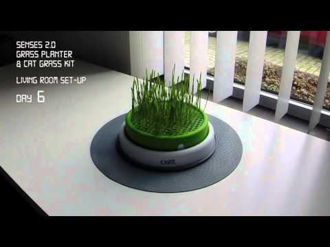 Catit Senses 2.0 Grass Planter Time lapse