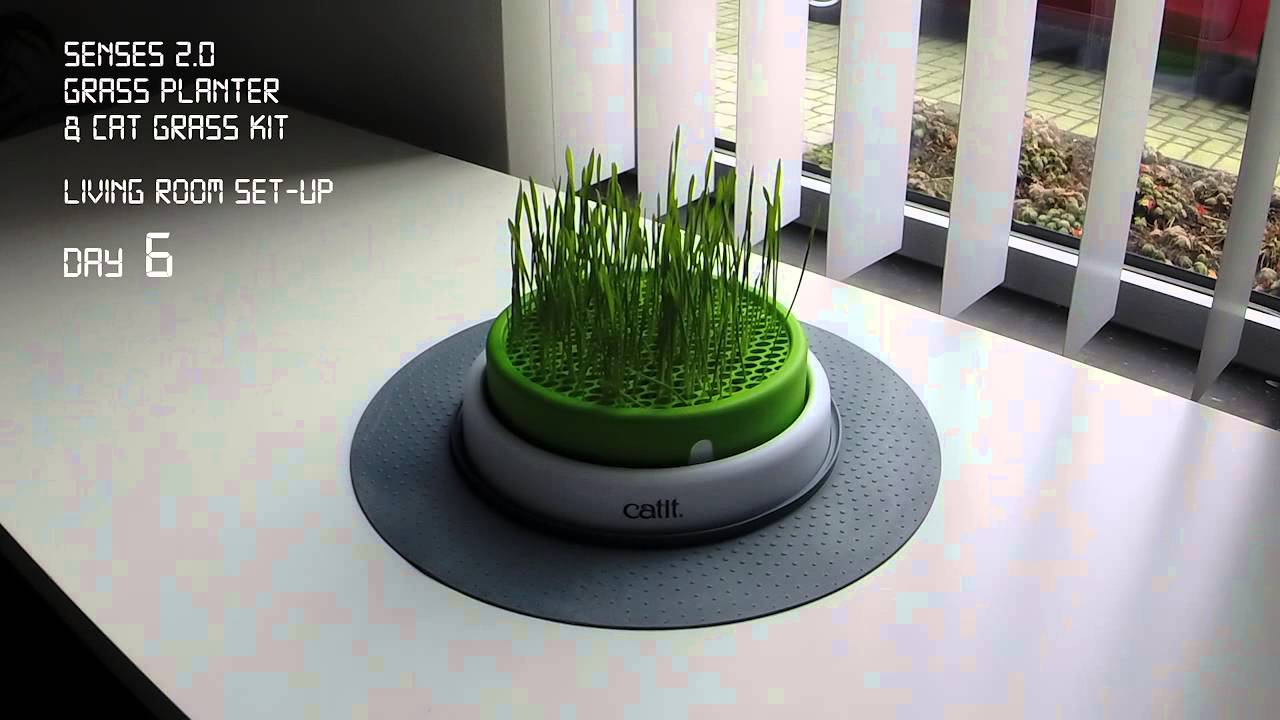 Catit Senses 2 0 Grass Planter Time Lapse Youtube