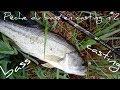 pêche du black bass en casting n°2
