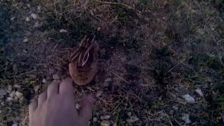 Зайцы вообще обнаглели 2 прикол,животные,охота,рыбалка,природа,жесть