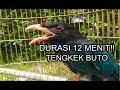 Tengkek Buto Gacor Durasi  Menit Cocok Untuk Masteran Atau Pancingan  Mp3 - Mp4 Download