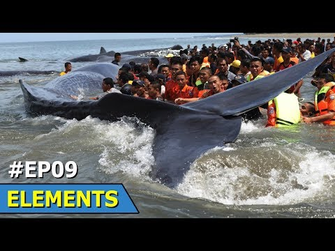 South west Tokyo: Small Whales Beached | New Energy Source | Elements | Episode 9