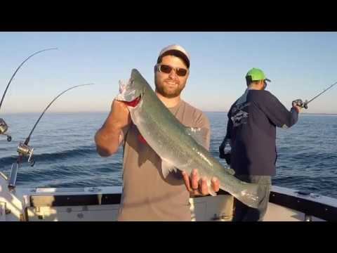 Steelhead, Lake Trout, And King Salmon Caught Out Of Lake Michigan!