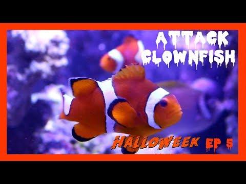 My Clownfish Bit Me!