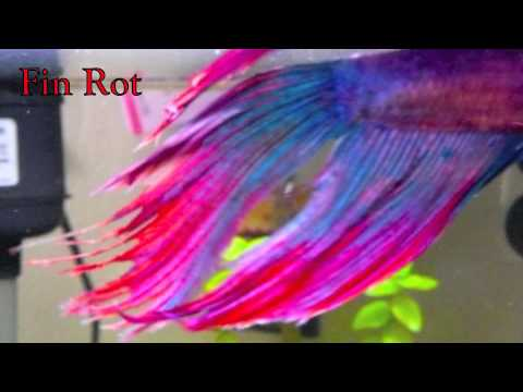 How To Pick A Betta Fish
