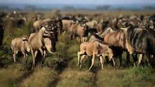 Serengeti Safari Episode 4 - Variety is the Spice of Life