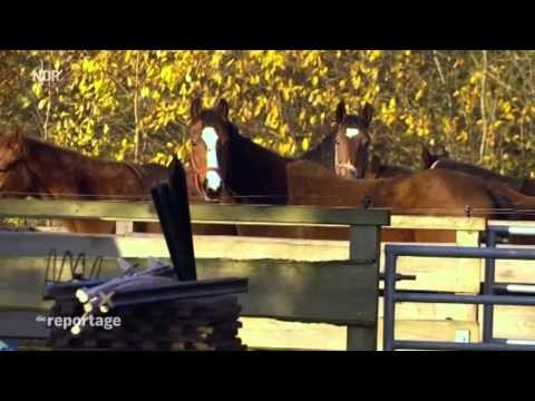 Pferdeklappe Schleswig Holstein