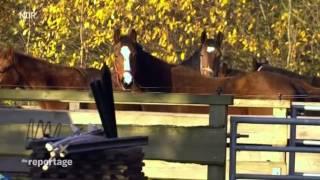 Pferdeklappe in Schleswig Holstein - Die Reportage NDR - Version 02