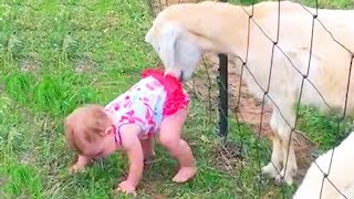 Babies And Kids Zoo Fails Funny Videos