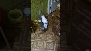 Собака извращенец-кот в шоке