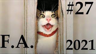 ПРИКОЛЫ С КОТАМИ И СОБАКАМИ 2021 FUNNY VIDEOS ANIMALS 2021 PART 27
