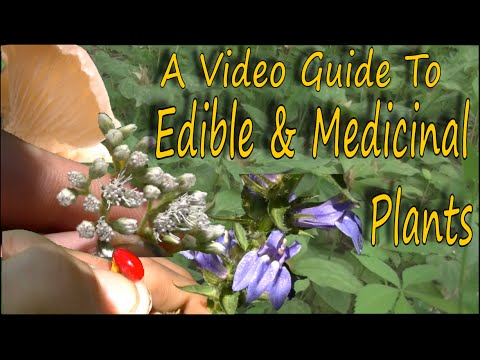 How To Identify Wild Edibles & Medicinal Plants - Toxic Look A Likes (HD)